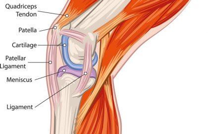 כאבי ברכיים ובעיות ברכיים